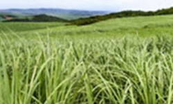 KZN Growth Fund - The South African sugar industry