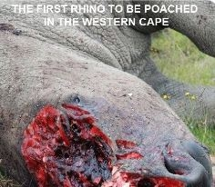 KZN Wildlife respond to implication in rhino poaching