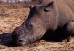 Poacher shot dead in Imfolozi